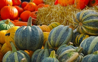 Fall Pumpkin & Squash Harvest