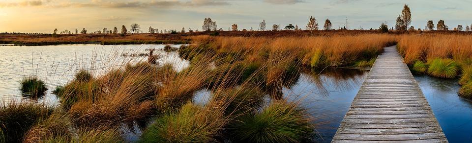 Why do we need Louisiana's wetlands? (Wetland hydrologic functions)